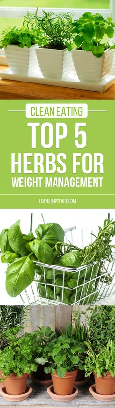 Easy Herbs: Top 5 healthy herbs for weight management