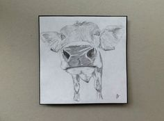 Signed Original pencil drawing by H. JOSÉ, Curious Nosey Cow