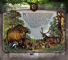 Zwierzęta mazurskich lasów