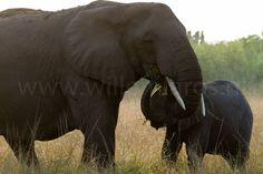 Niks en niemand kan zonder moeder. #photography #travelphotography #fotografie #canonnederland #canon_photos #panasonic #travelling #reizen #reisjournalist #travelwriter #fotoworkshop #willemlaros.nl #reisfotografie #tw #fb #compositie #natuurfotografie #nature #africa #uganda