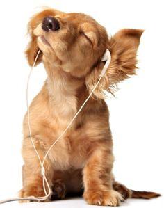 Cute Puppy Listening to Music Photo