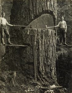 "burnedshoes: ""© Arthur M. Prentiss, ca. 1915, Lumberwork Selection from a series of occupational photographs of the lumber industry in Portland, Oregon and Challam Bay, Washington, taken by two..."
