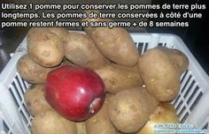 Conserver les pommes de terre plus longtemps ? Placer une pomme auprès d'elles. Elles ne germeront pas ... Attention ! Les oignons à proximité font ramollir et pourrir les pommes de terre.