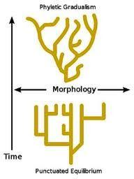 Evolucion unilineal yahoo dating