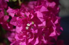 "Saatchi Art Artist Mahsa Watercolor; Photography, ""Pink flower"" #art"