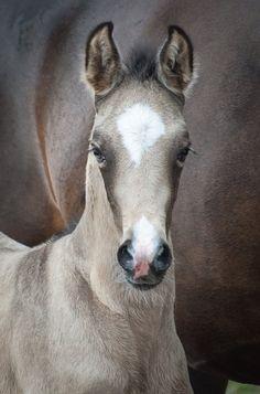 What a beautiful foal