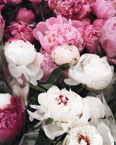 "toujoursdramatique: ""I just love when my favorite flower is back in season """