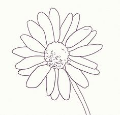 How to Draw a Realistic Daisy: Daisy Drawing
