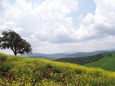 Wide horizon in the Maremma countryside. #maremma #tuscany #nature