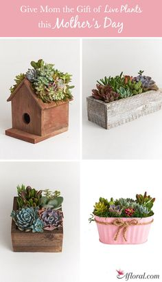 Give mom the gift of live plants this mothers day! Live Succulent Terrariums and Live House Plants at Afloral.com