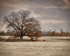 Lazy Autumn Day - Farm Landscape