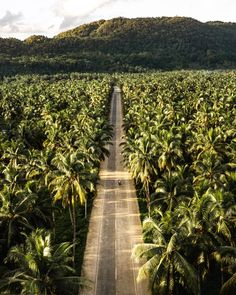 Palm Tree Road Siargao - Explore The Endless Road Of Pristine Palms Drone Photography, Travel Photography, Siargao Philippines, Surf Competition, Siargao Island, Epic Photos, Island Tour, Rock Pools, Tropical Vibes