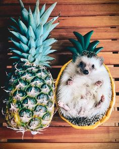 I may be spiky on the outside, but I'm sweet on the inside #pineapple #hedgehog #goodvibesonly #weekendvibes