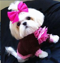 """La foto del día """"Lista para la fiesta"""" #perro #perros #mascotas"""
