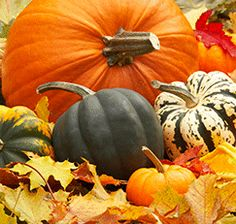 pumpkins-in-fall