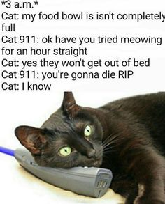 Cat 911 Isn't Very Helpful | See more fun videos here: http://gwyl.io/