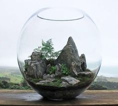 Terrariums are beautiful miniature landscapes, a slice of nature housed in glass. Terrariums are perfect for adding stunning plant life to your home or office. Below showcases a brief selection of 'Desert World' & 'Forest World'… Mini Terrarium, Miniature Terrarium, Terrarium Scene, Terrarium Centerpiece, How To Make Terrariums, Terrarium Plants, Glass Terrarium, Succulent Terrarium, Terrarium Ideas