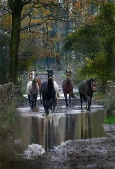 (notitle) - Beauty on Hooves - Reiten Horse Photos, Horse Pictures, Animal Pictures, All The Pretty Horses, Beautiful Horses, Animals Beautiful, Animals And Pets, Cute Animals, Photo Animaliere