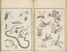 Hokusai Manga. Carnets de croquis divers de Hokusai, carnet n° 1 Hokusai manga Ère Bunka, an XI (janvier 1814) Livre edehon, format hanshibon Signature : Katsushika Hokusai hitsu Sceau : Raishin Éditeur : Eiraku-ya Tōshirō Tsuwano, Katsushika Hokusai Museum of Art © Katsushika Hokusai Museum of Art Cette oeuvre est présentée dans les 2 volets