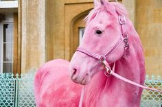 Pink Horse - I love it!