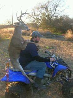 Lol, funny.Deer Riding 4 wheeler