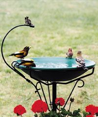 Heated bird bath for the birds in the winter.