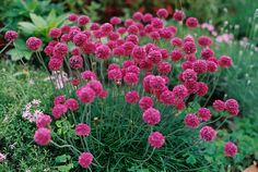 other people's gardens by fieldguided, via Flickr