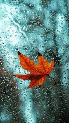 The latest iPhone11, iPhone11 Pro, iPhone 11 Pro Max mobile phone HD wallpapers free download, leaf, glass, drops, wet, macro - Free Wallpaper   Download Free Wallpapers