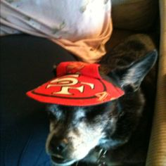 Buster ready for the big game Go 49's