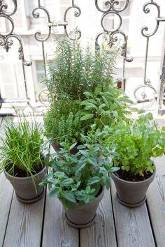 Tips on how to plant fragrant vegetation in your balcony Flower Garden, Balcony Herb Gardens, Plants, Vegetation, Herb Garden, Permaculture Gardening, Window Box Garden, Balcony Plants, Sage Plant