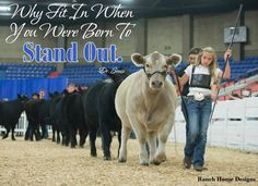 February 2015 Livestock Motivation - Ranch House Designs, Inc. Farm Animals, Funny Animals, Cute Animals, Cow Quotes, Girl Quotes, Show Cows, Inspirational Horse Quotes, Farm Humor, Show Cattle