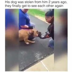 Dogs Always Remember You❤️ ♥ ️ - Tiere / pet / animal - Animals Cute Funny Animals, Cute Baby Animals, Funny Cute, Funny Dogs, Animals And Pets, I Love Dogs, Puppy Love, Cute Puppies, Cute Dogs