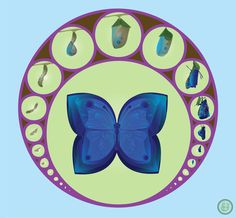 Life Cycle of the Fender's Blue Butterfly by Selena Dugan-Fields Blue Butterfly, Life Cycles, Children's Book Illustration, Native Plants, Thesis, Selena, Childrens Books, Fields, Delicate