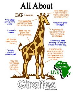My All About Giraffes Book - African Animal Unit Study