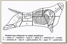 Podział tuszy cielęcej i wykorzystanie mięsa oraz podrobów