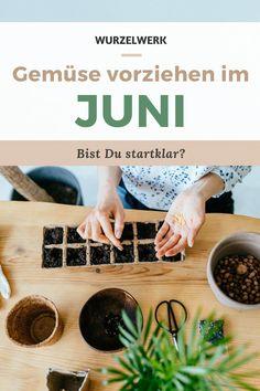 Aussaat & Pflanzen im Juni + Beispiel-Pflanzplan - Ab Juni gibt es im Gemüsegarten ordentlich was zu ernten! In diesem Blog-Artikel verrate ich Dir, welche Gartenarbeit im Juni ansteht. Pflanze jetzt leckeren Spinat, Lauch oder Zucchini. Mit dieser super Übersicht und Anleitung wird der Juni ein voller Erfolg. Alles was Du säen, pflanzen oder vorziehen solltest verrate ich Dir hier!#Juni #Garten #Selbstversorgung #Wurzelwerk Urban Gardening, Juni, Zucchini, Kitchen, Planting Fruit Trees, Companion Planting, Country Living, Cooking, Cucina