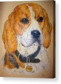 """Beagle Dog: An oil pastel drawing printed on to the back of a 1/4"""" thick acrylic sheet to produce a high gloss effect by Kelly Goss Art. Delivered """"ready to hang"""" with two mounting options. Perfect to brighten up and decorate your home. Fit for any wall in any room. The special gift to spice up a friend's home decor. For a lover of animals, pets and art."""