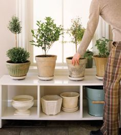 Top 10 feng shui plants as best cures for home (or office) http://fengshui.about.com/b/2013/02/22/feng-shui-plants-as-best-cures.htm