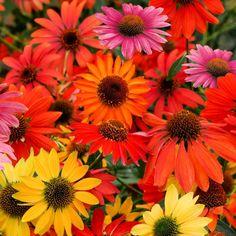 Spirit, Plants, Garden Plants, Shade Perennials, Insects, Ideas, Flora, Plant, Planting
