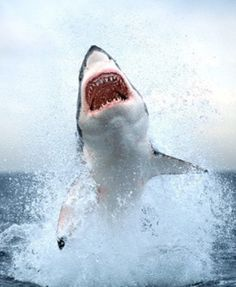 Shark!   Lets Go Diving Amazing discounts - up to 80% off Compare prices on 100's of Hotel-Flight Bookings sites at once Multicityworldtravel.com