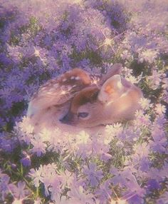 Angel Aesthetic, Nature Aesthetic, Flower Aesthetic, Aesthetic Photo, Aesthetic Pictures, Lavender Aesthetic, Purple Aesthetic, Aesthetic Grunge, Cute Little Animals