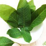 Img Coco, Diabetes, Plant Leaves, Diet, Medicine, Plant, Health, Backen, Diabetic Living