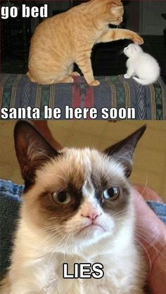 For more Grumpy Cat quote, humor and meme visit… Grumpy Cat Quotes, Funny Grumpy Cat Memes, Funny Animal Jokes, Cat Jokes, Cute Funny Animals, Funny Animal Pictures, Cute Cats, Funny Cats, Grumpy Kitty