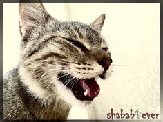 this is my cat before that it die   : (  : (  : (    allah yr7mha  kant 5oosh 7rma =D     How To Enjoy your cats, kittens  http://catsandkittenspets.blogspot.com/