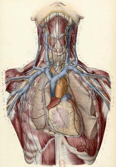 book page art Human Anatomy Art, Human Anatomy And Physiology, Anatomy Drawing, Medical Drawings, Medical Art, Illustrations Médicales, Medical Wallpaper, Medical Anatomy, Medical Illustration