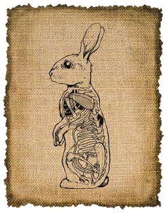 Vintage , Rabbit Anatomic, Ephemera, Altered, Digital Image Transfer  No. 381