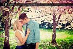 passionate kiss under the cherry Blossom trees in Washington DC