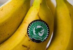 13+1 laktató saláta kevesebb mint 300 kalóriából | NOSALTY Rainforest Action Network, Rainforest Cafe, Awareness Campaign, Ben And Jerrys, Fruit, Environmentalism, Food, Breakfast Fruit, Yellow Fruit