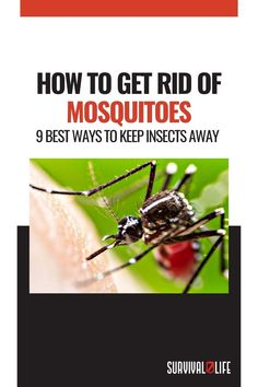 Mosquito Repelling Plants, Insect Bites, Skills To Learn, Survival Life, Mosquitoes, Outdoor Survival, Wilderness, Exploring