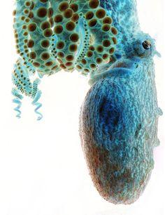 Negative image of an octopus Sarah Jackson (Clanton, Alabama) Photographed February 2009, Atlanta, Georgia